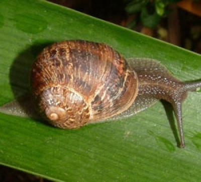 Control of garden Snails and Slugs