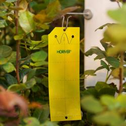 yellow sticky cards traps 10cm X 25cm